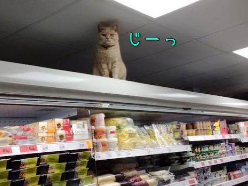 スーパーマーケットに住みついた猫00