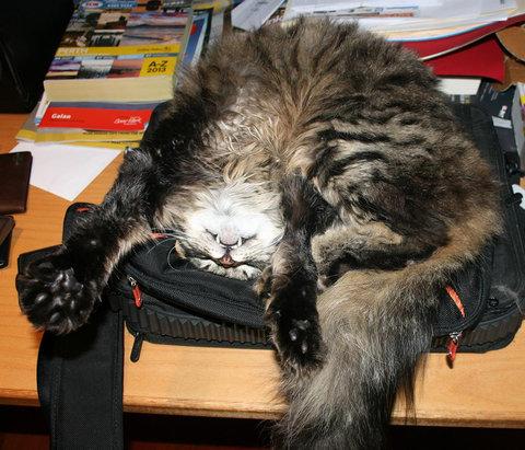 猫が「スパイvsスパイ」04