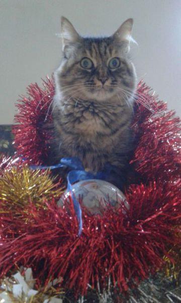 クリスマスとペット13
