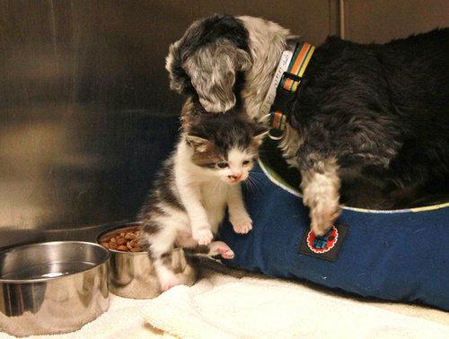子猫を守る捨て犬03