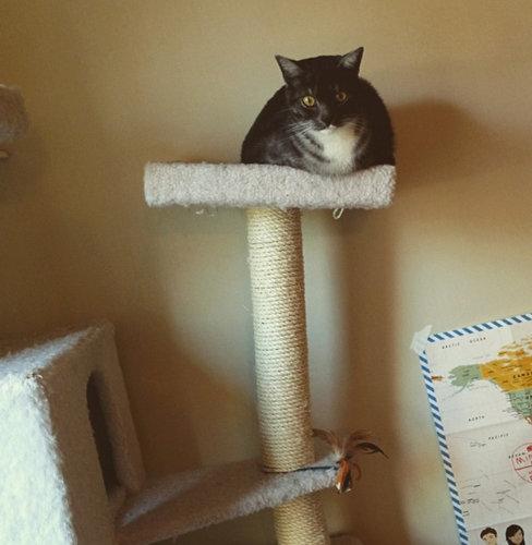 猫が太りすぎたと思うとき05
