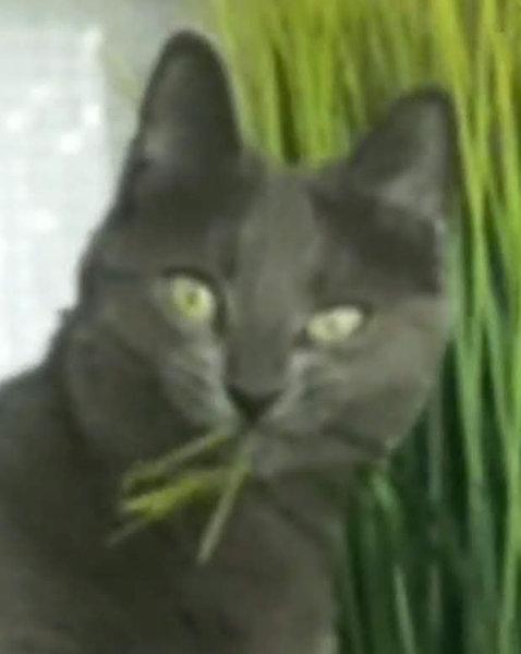 猫シッター05