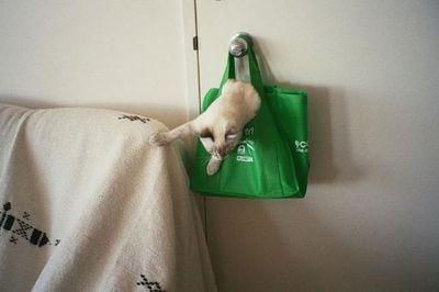 狭い所に入りたがる猫11