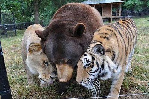 仲良しな動物たち25