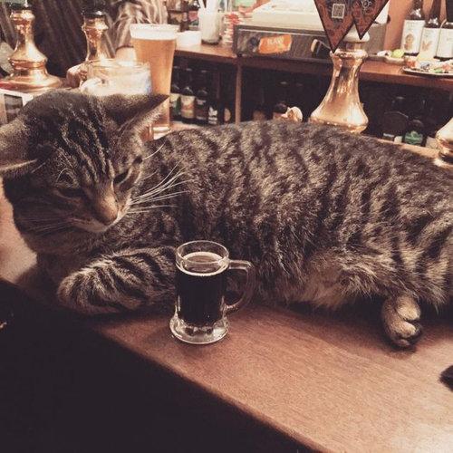 イギリスの猫パブ05