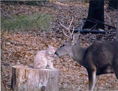 鹿と猫08