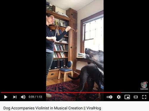バイオリンの横で歌う犬