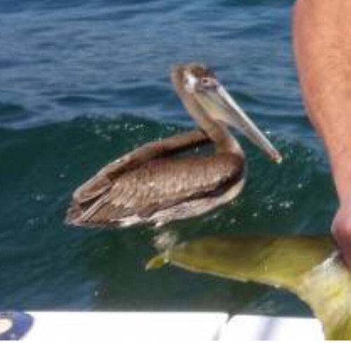大物を釣ったときの記念撮影04