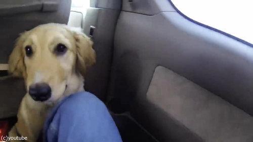 子犬がママと再会01