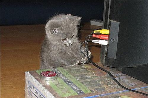 テレビを見るのを邪魔する猫20