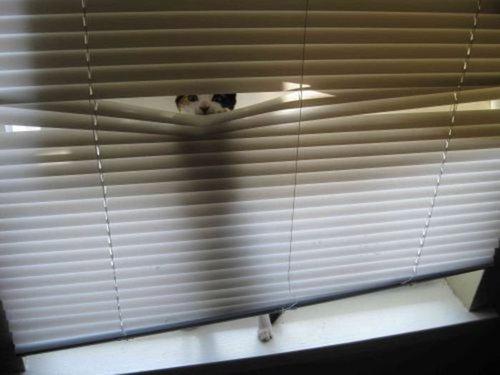 この家に猫がいる理由03