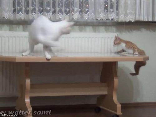 子猫、おとな猫を驚かすのが大好き03