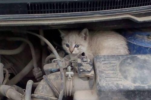 車の中にいる動物12