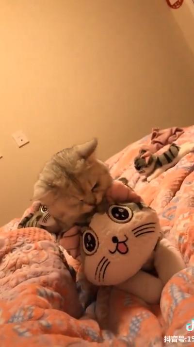 飼い主にぬいぐるみを触らせない猫03