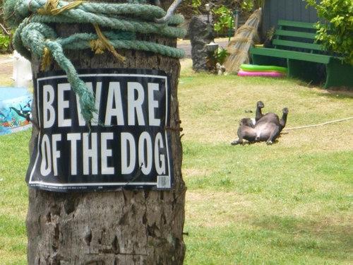 「猛犬注意」の看板13