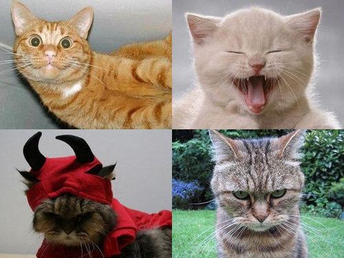 猫の顔文字00