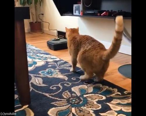 ルンバVS猫(勝者ルンバ)02