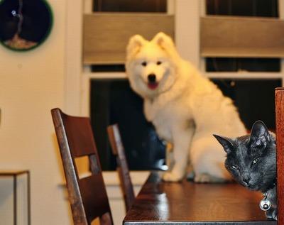 邪魔する犬と猫09