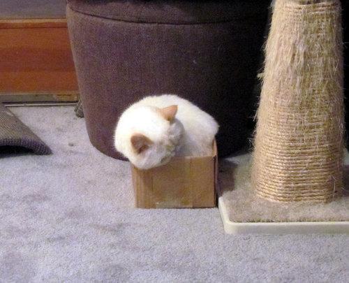 箱入り猫06