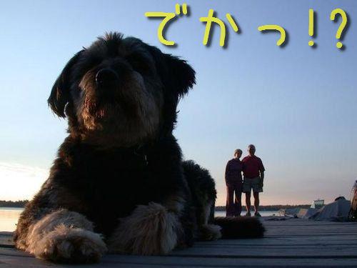 犬を巨大化する写真テクニック00