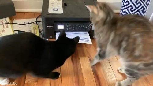 プリンターに興味津々な猫がかわいい03