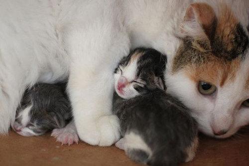 ぬくぬくする猫たち11