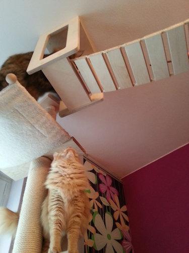猫用のつり橋10