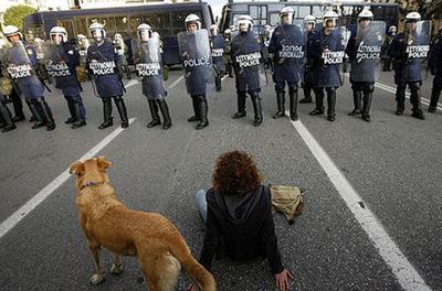 ギリシャの暴動犬04