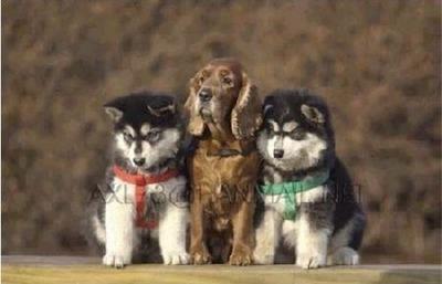 3匹の犬の成長02