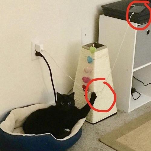猫に敗北した人々01