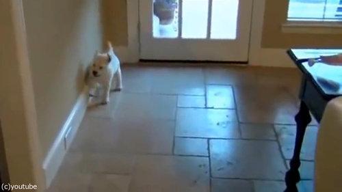 子犬とドアストッパー01