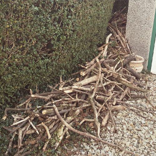 うちの犬は散歩中に木の枝を持ち帰る03