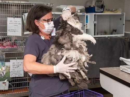 長い毛がからまっていた猫を救出00