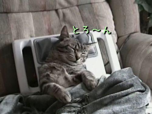 猫とマッサージ機00