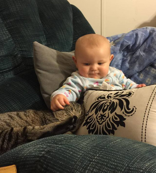 妊娠中に拾った猫が、今は赤ちゃんと親友に12