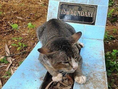飼い主の墓に1年も居座り続ける猫00