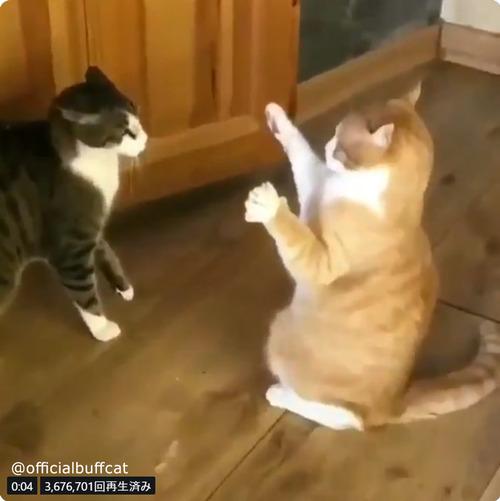にらみあう猫…まさかのオチに笑う01