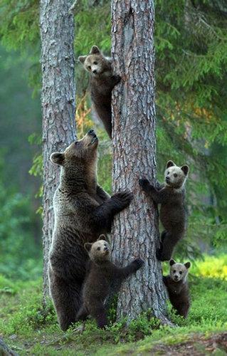 野生動物の親子11