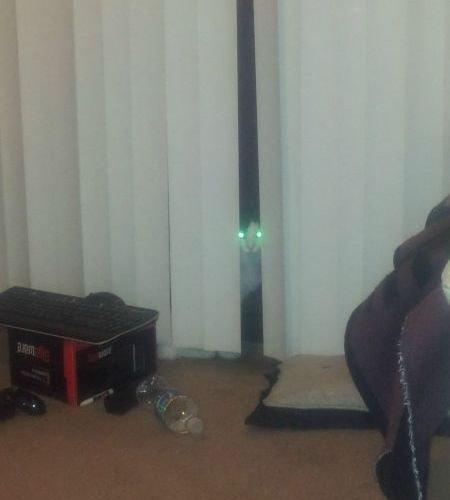 猫は見ている13