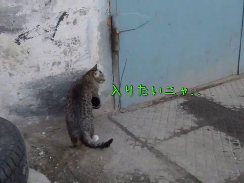 猫の家宅侵入の手口00