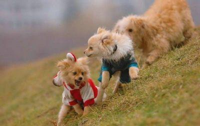 子犬の対決04
