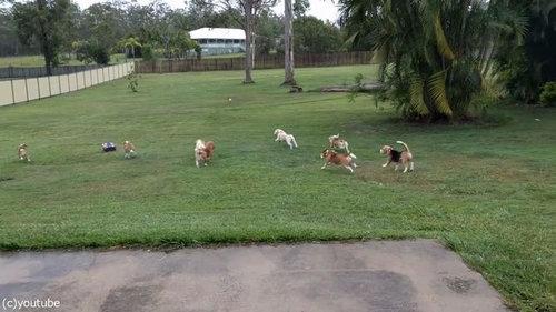 犬とラジコンカーと広い庭03