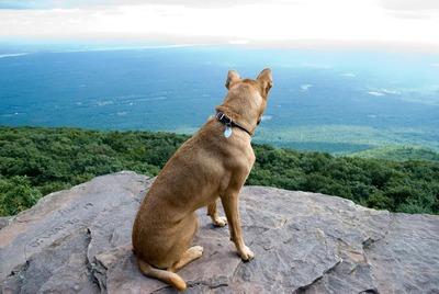 絶景を見下ろす犬08