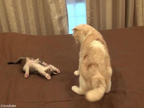 怒られた子猫の謎ポーズ03