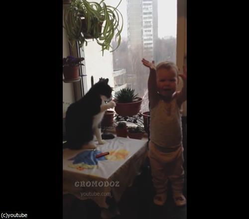 猫パンチ対決03