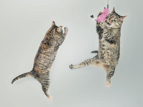 猫の今昔00
