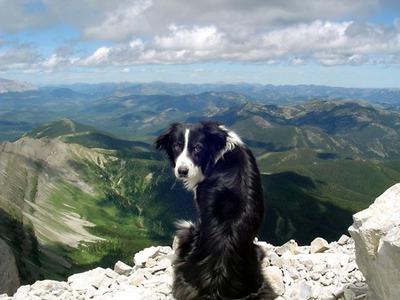 絶景を見下ろす犬03