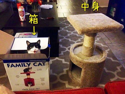 「猫あるある」00