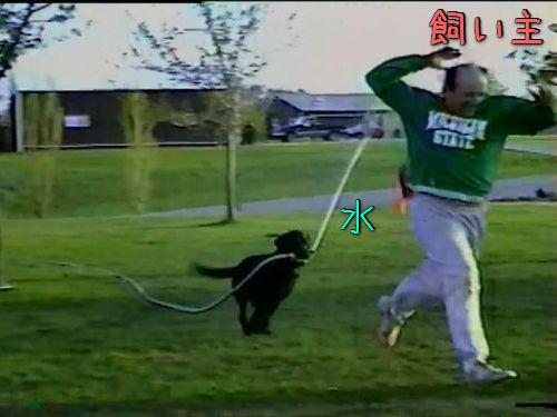 ホースと犬00