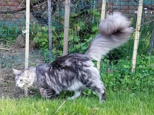 猫のしっぽが世界記録に04